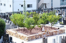 樹木葬墓地(梅林苑)